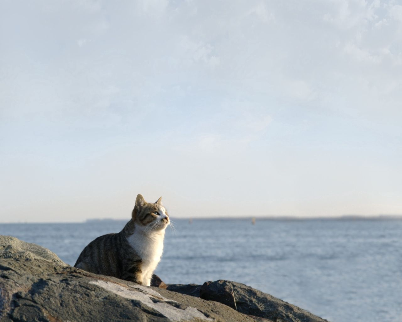 67351 Screensavers and Wallpapers Sit for phone. Download Animals, Stones, Sky, Sea, Sit, Cat, Watch, To Watch pictures for free