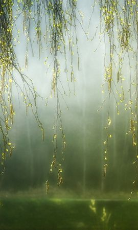 39974 descargar fondo de pantalla Plantas, Árboles: protectores de pantalla e imágenes gratis