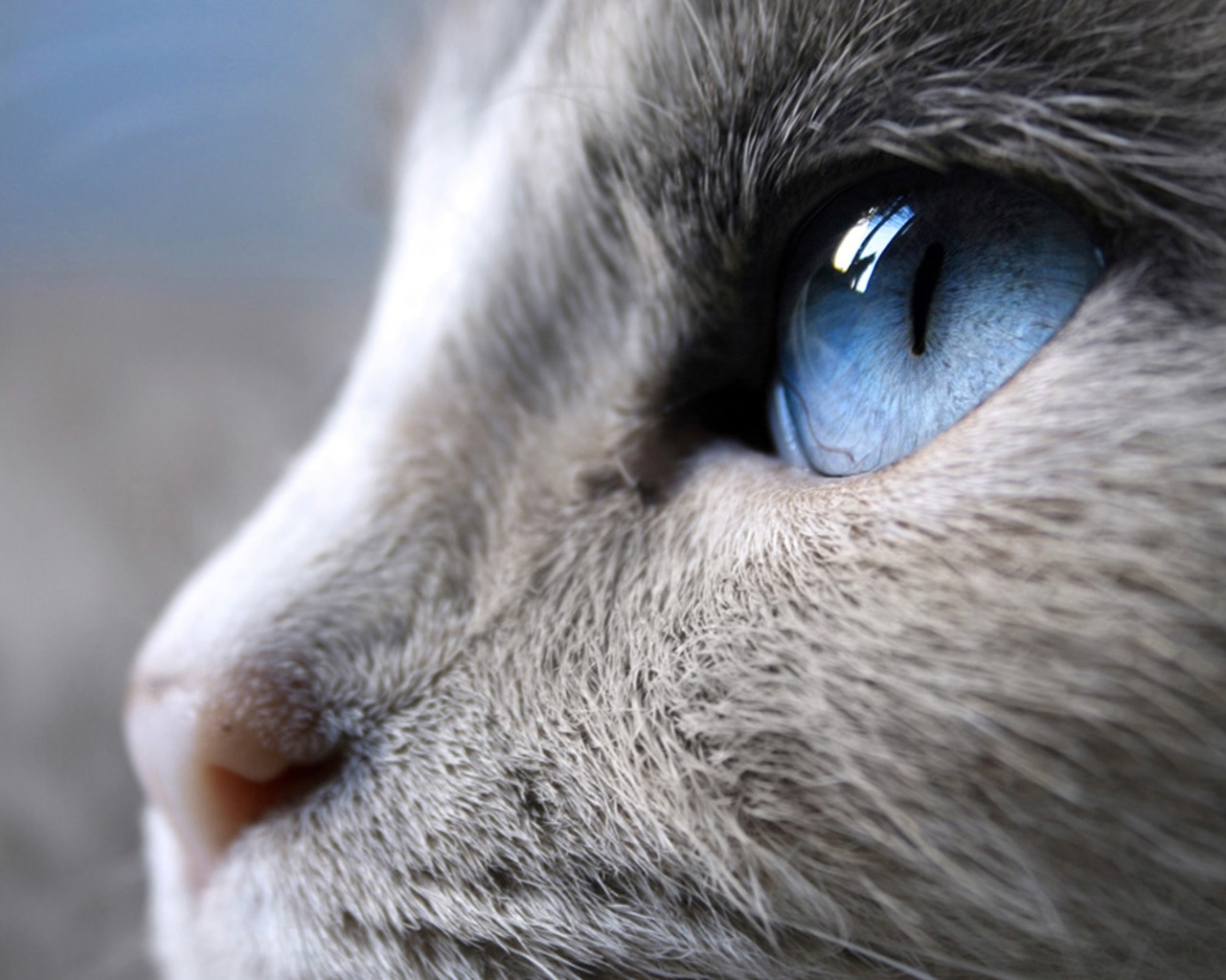 509 download wallpaper Animals, Cats screensavers and pictures for free