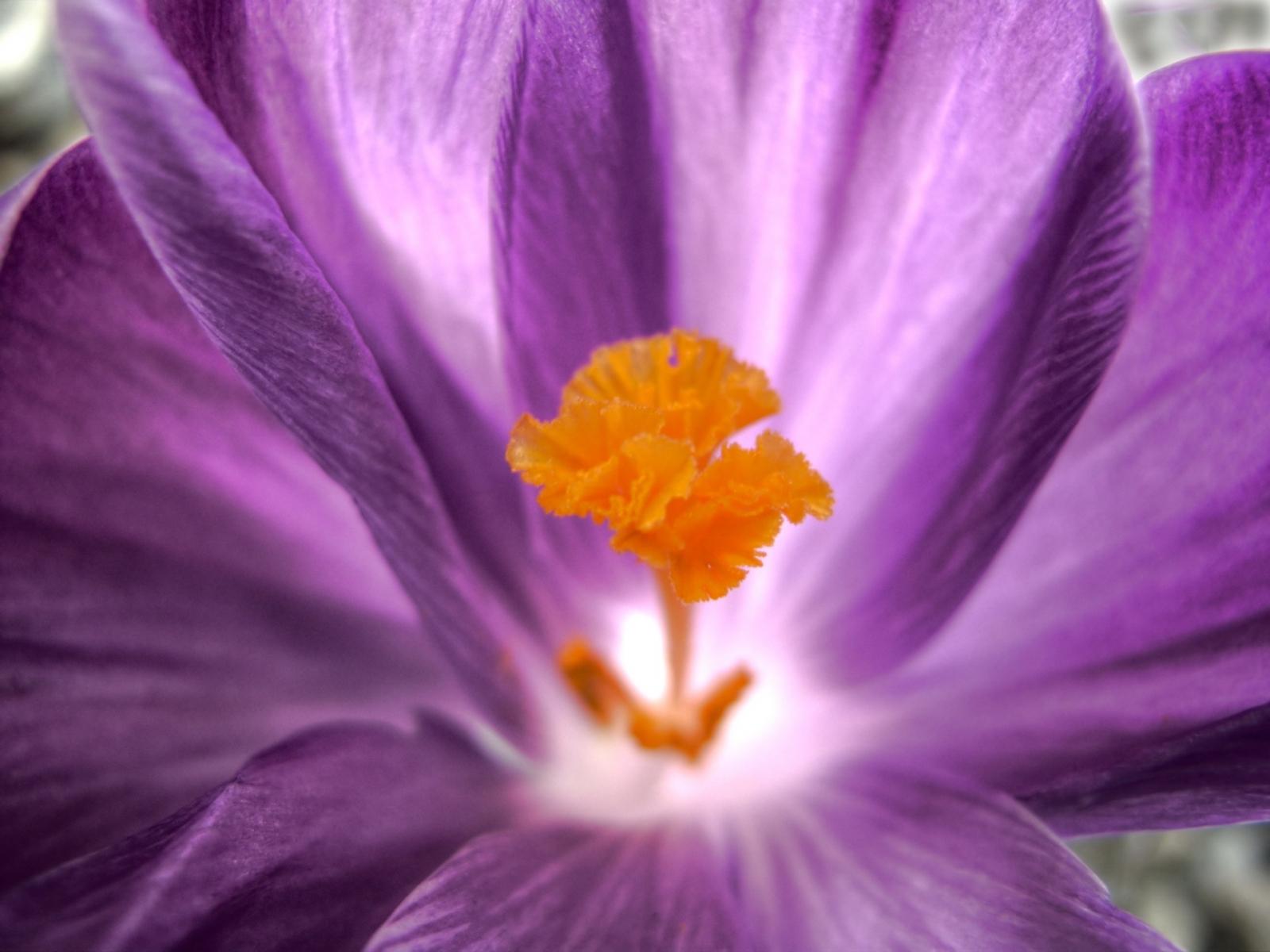 5493 скачать обои Растения, Цветы - заставки и картинки бесплатно