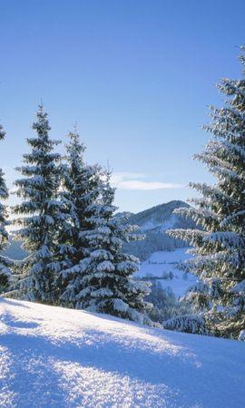 7776 скачать обои Пейзаж, Зима, Елки - заставки и картинки бесплатно