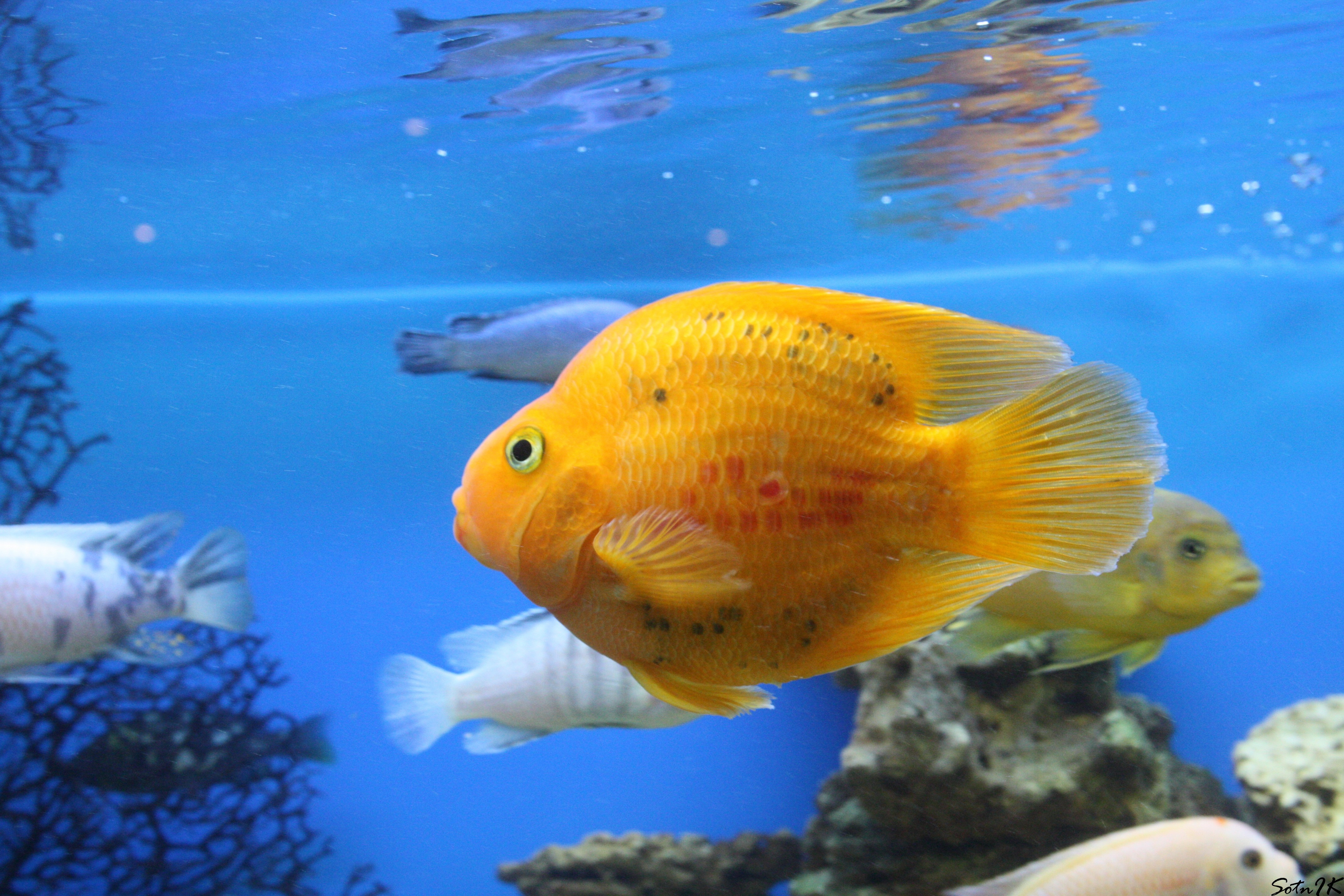 130410 download wallpaper Animals, To Swim, Swim, Underwater World, Fishes screensavers and pictures for free