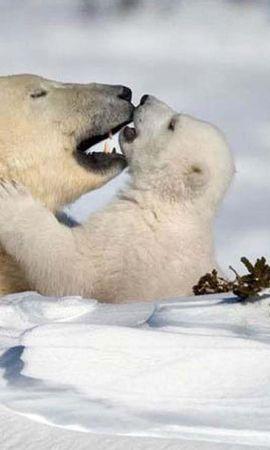 45473 baixar papel de parede Animais, Inverno, Neve, Bears - protetores de tela e imagens gratuitamente