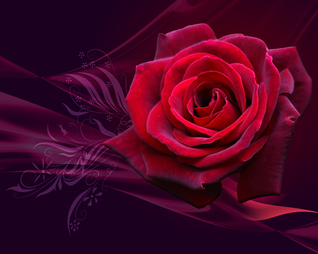 10856 скачать обои Растения, Цветы, Розы - заставки и картинки бесплатно