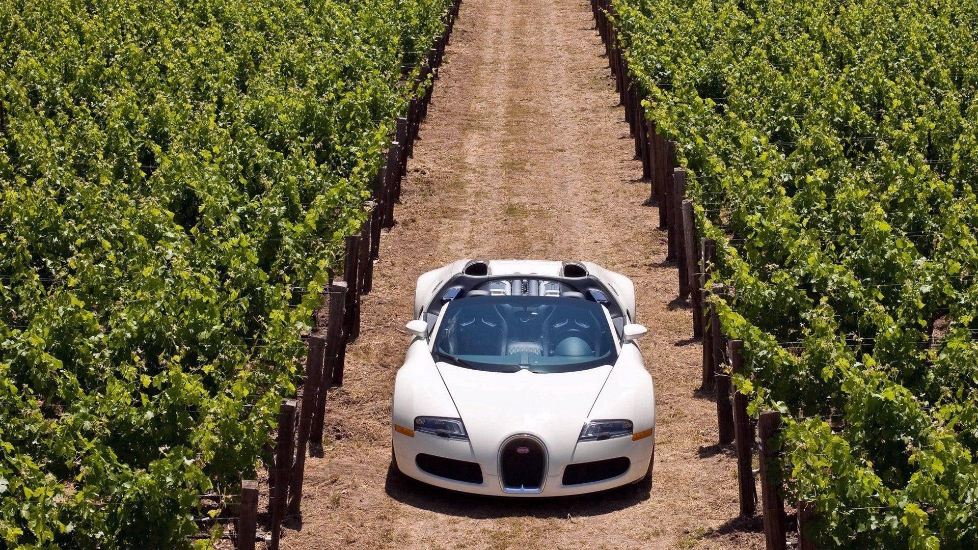 144750 скачать обои Тачки (Cars), Bugatti Veyron, Дорога, Трава, Машины, Стильный - заставки и картинки бесплатно