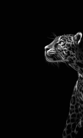 21218 download wallpaper Animals, Leopards screensavers and pictures for free