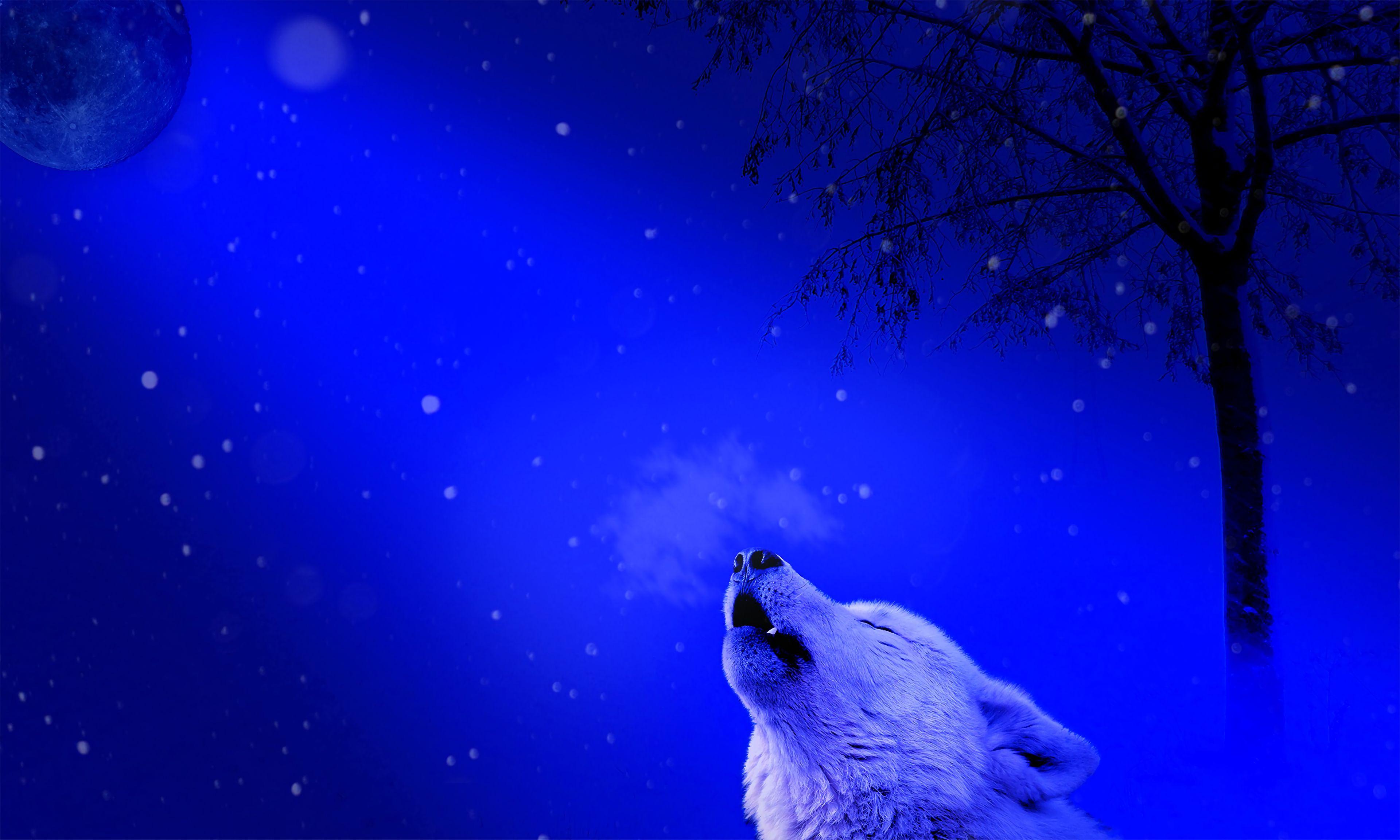 114675 télécharger le fond d'écran Animaux, Loup, Hurler, Solitude, Prédateur - économiseurs d'écran et images gratuitement