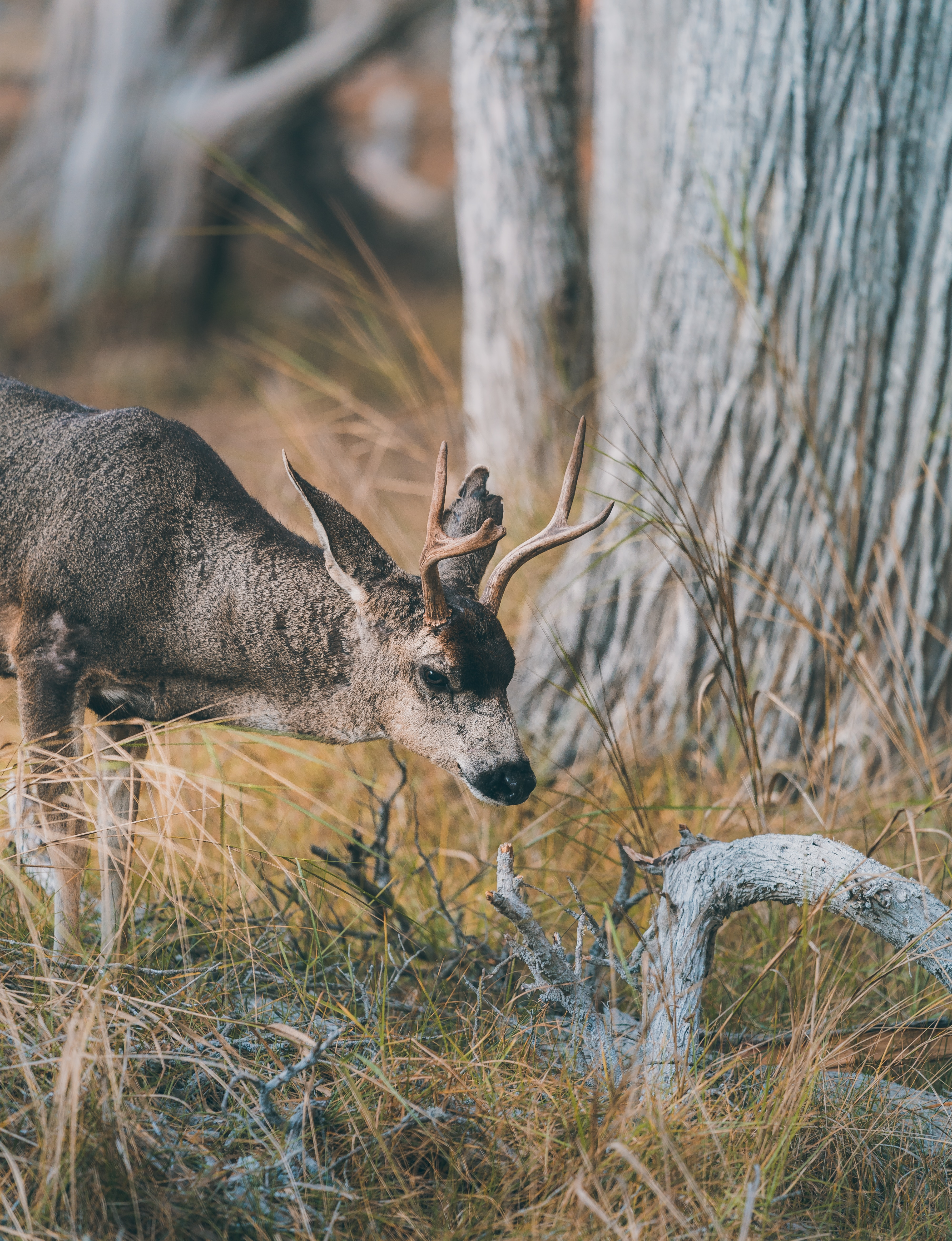 50949 Screensavers and Wallpapers Deer for phone. Download Deer, Animals, Grass, Brown, Branch, Animal pictures for free