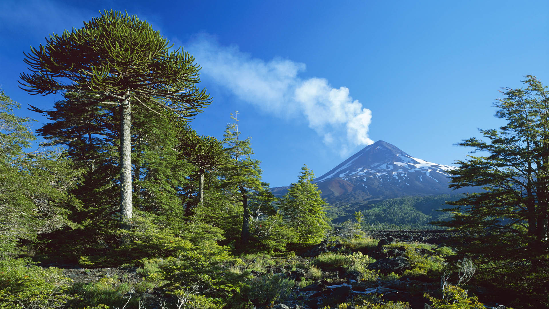 31964 download wallpaper Landscape, Trees, Mountains screensavers and pictures for free