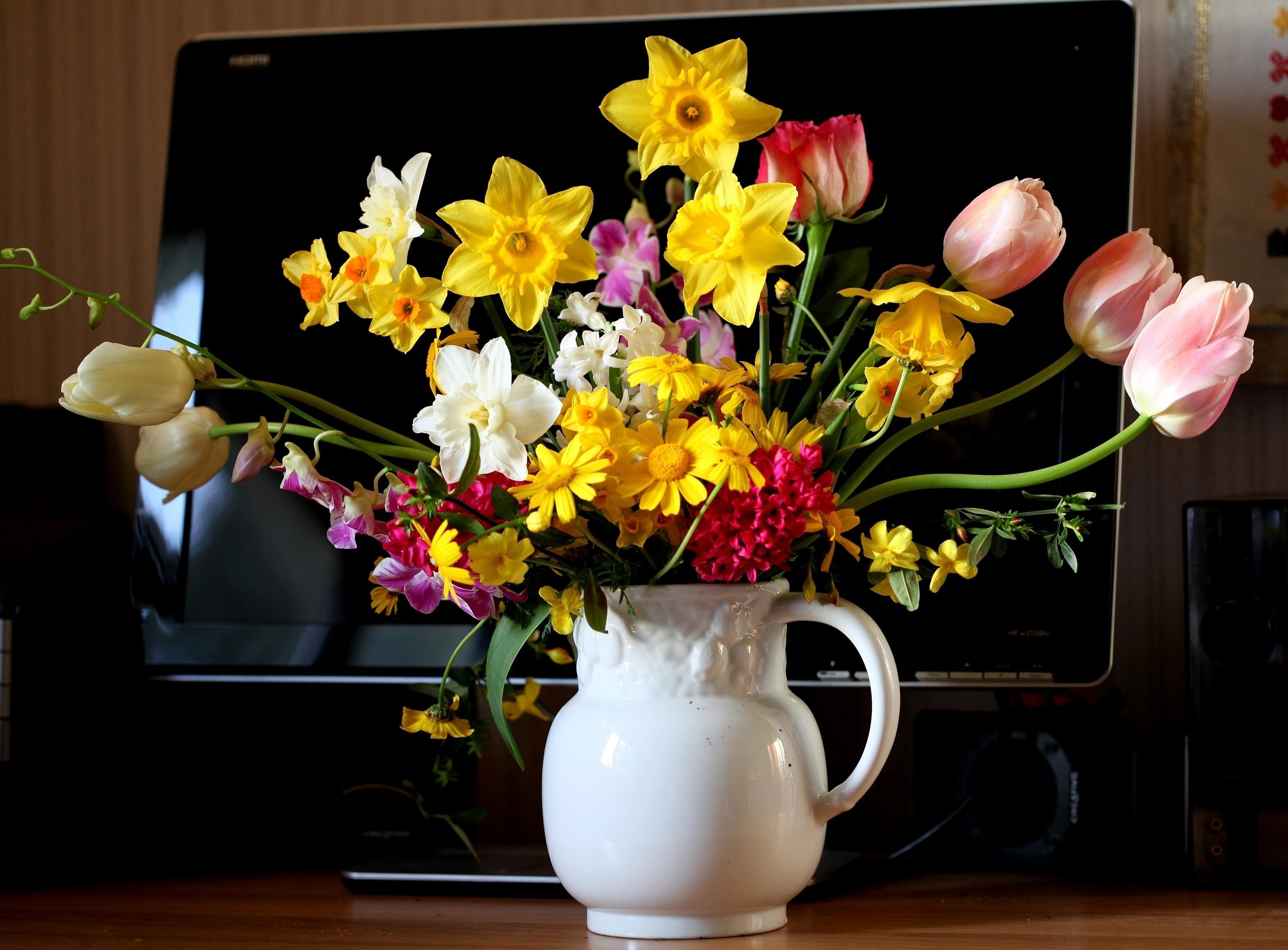 56385 Заставки и Обои Нарциссы на телефон. Скачать Цветы, Тюльпаны, Нарциссы, Гиацинт, Букет, Кувшин, Монитор картинки бесплатно