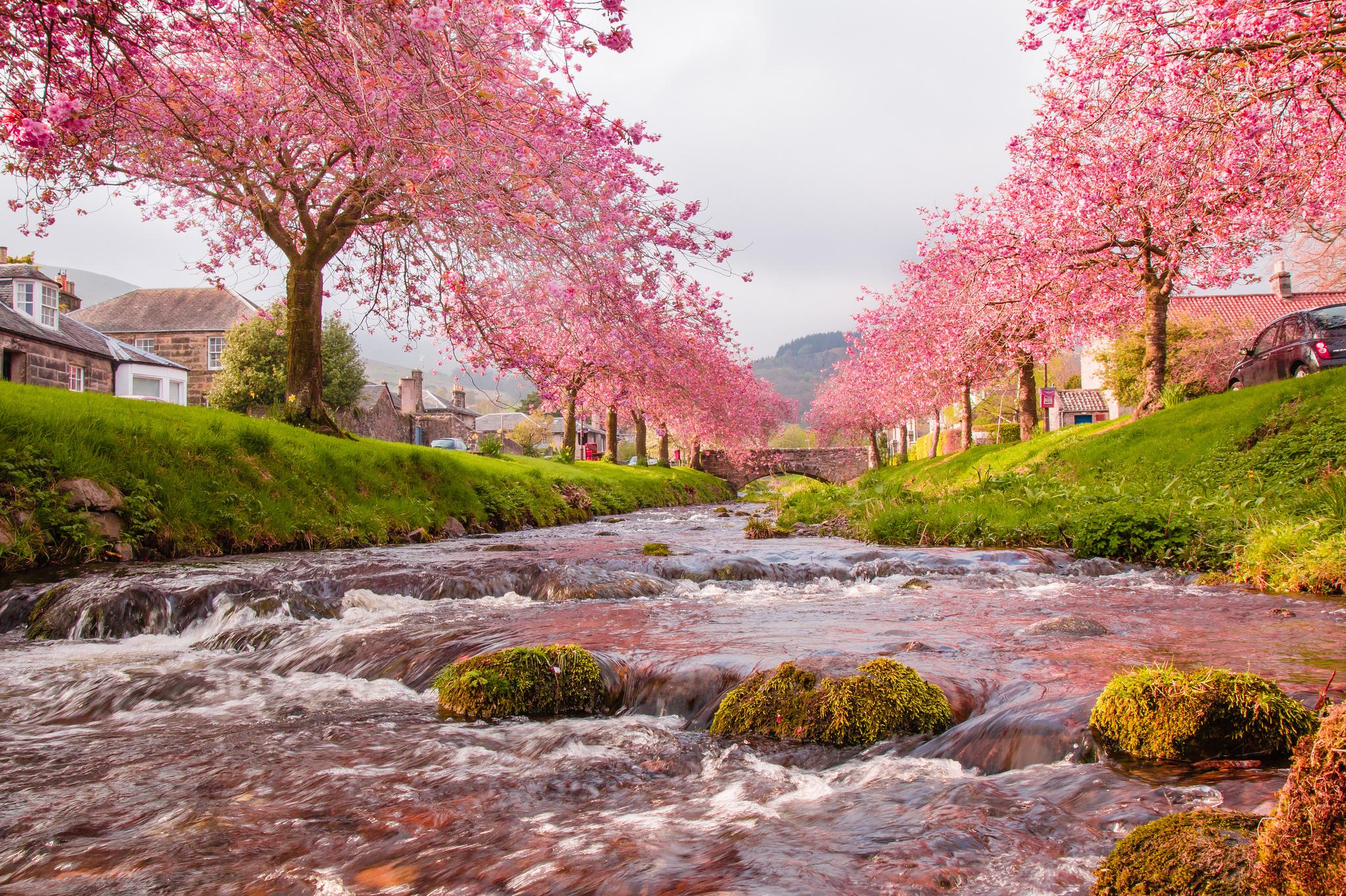 146275 Screensavers and Wallpapers Sakura for phone. Download Nature, Flow, Rivers, Sakura, Bridge pictures for free