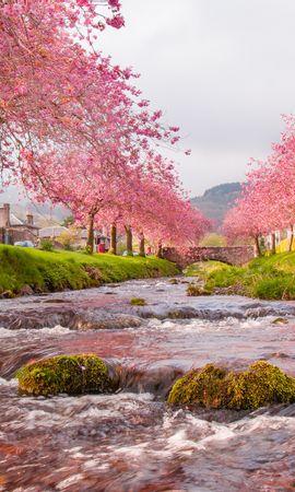 146275 baixar papel de parede Natureza, Ponte, Rios, Fluxo, Fluir, Sakura - protetores de tela e imagens gratuitamente