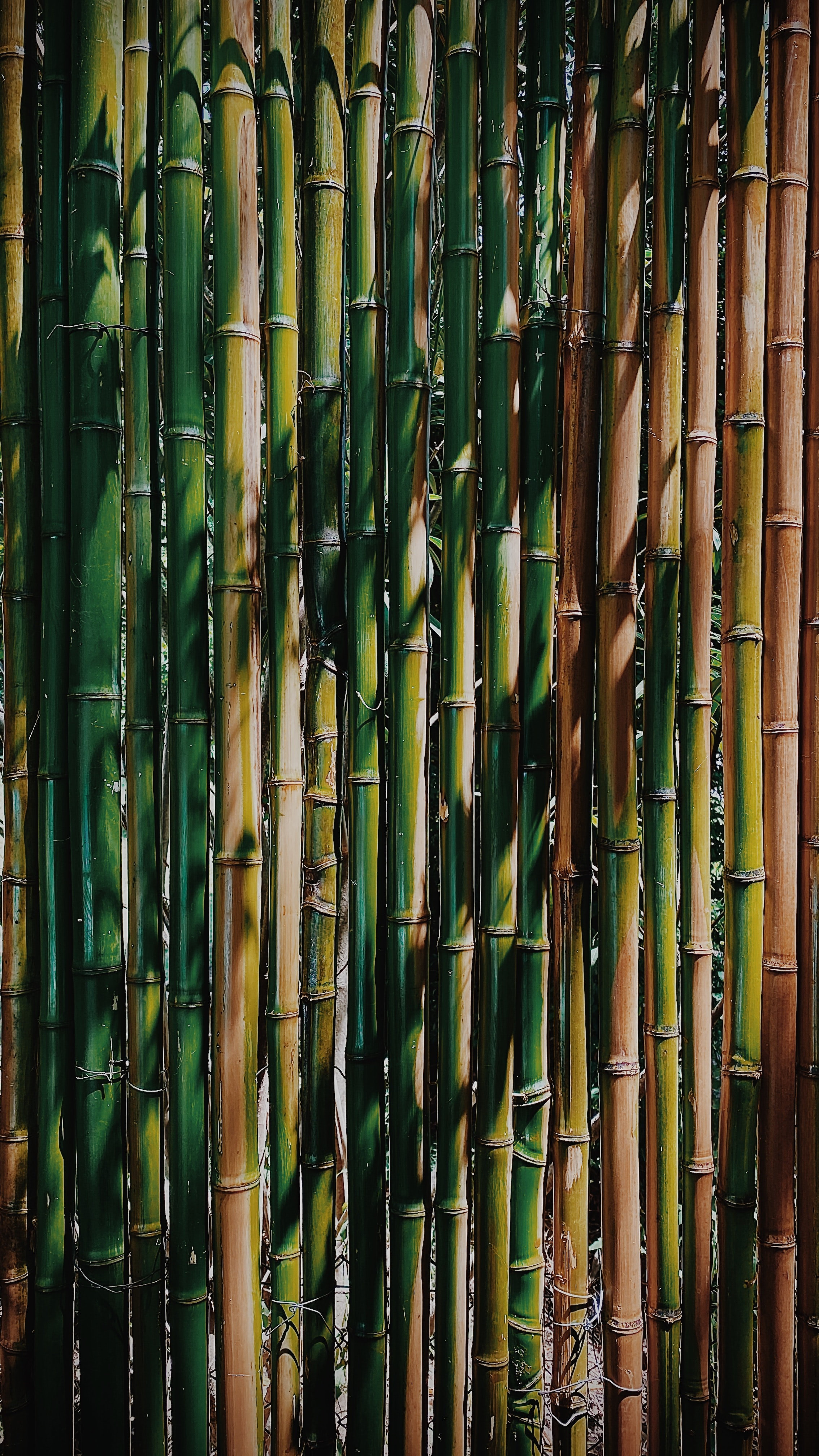 53924 download wallpaper Textures, Texture, Bamboo, Stems, Plant screensavers and pictures for free