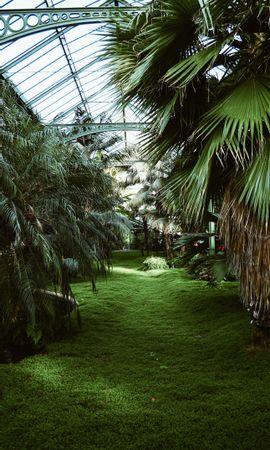 131549 descargar fondo de pantalla Miscelánea, Misceláneo, Invernadero, Tropical, Plantas, Palms: protectores de pantalla e imágenes gratis