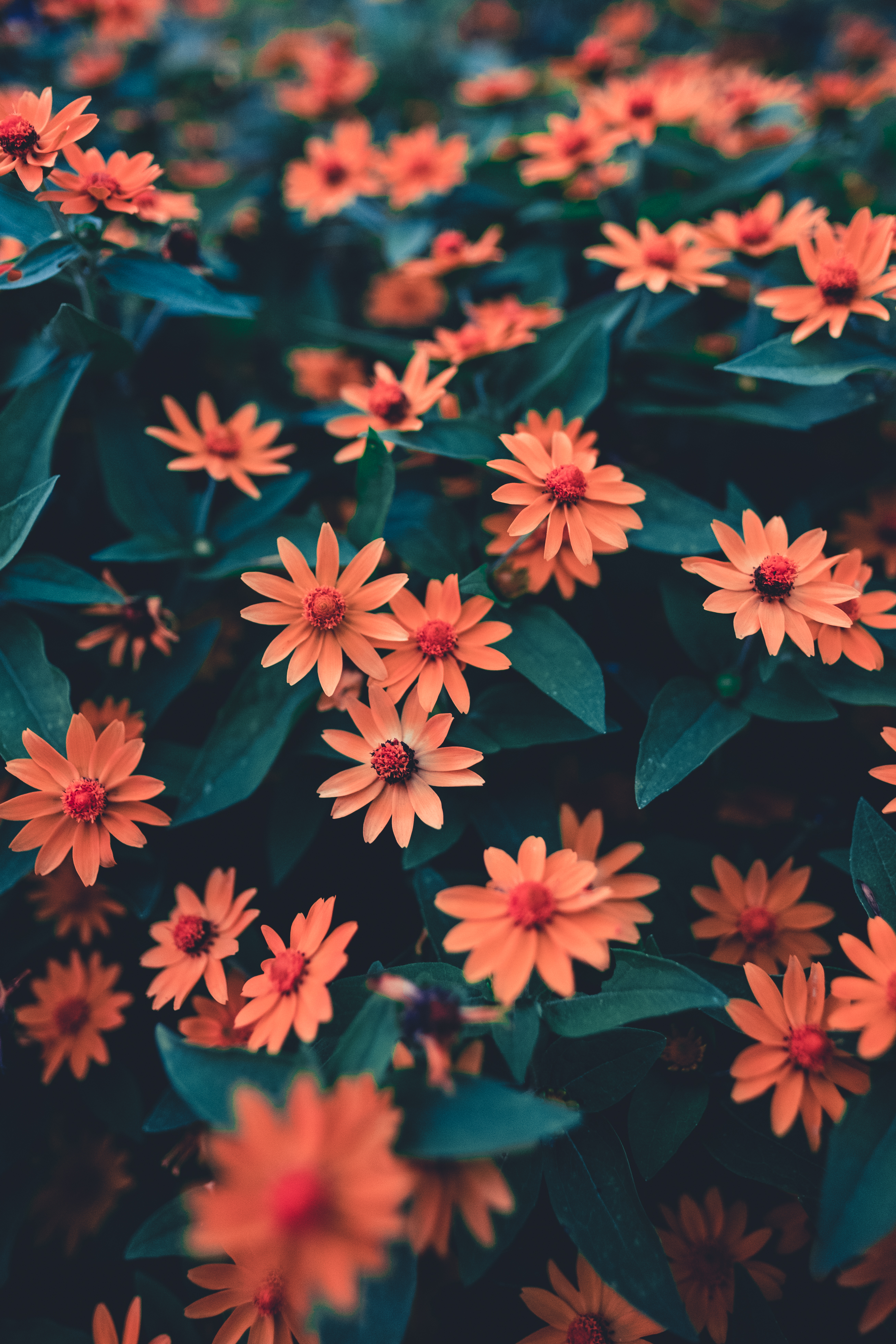 121685 Screensavers and Wallpapers Flower Bed for phone. Download Flowers, Leaves, Petals, Blur, Smooth, Bloom, Flowering, Flower Bed, Flowerbed, Buds pictures for free