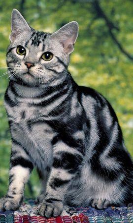 4613 скачать обои Животные, Кошки (Коты, Котики) - заставки и картинки бесплатно