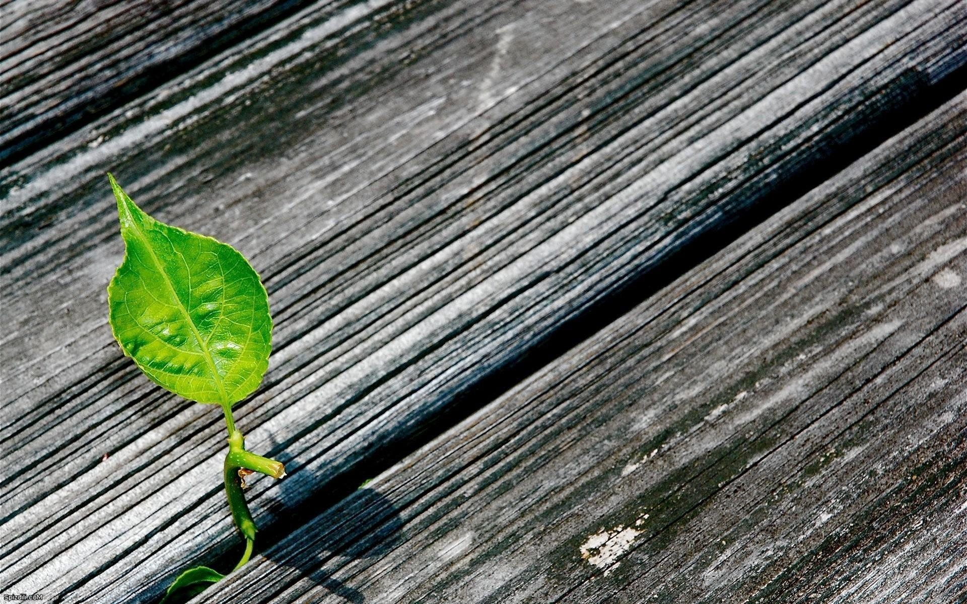 11291 скачать обои Растения, Листья - заставки и картинки бесплатно