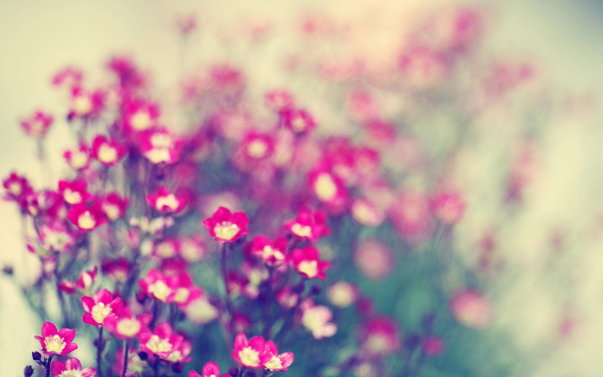 15704 descargar fondo de pantalla Plantas, Flores: protectores de pantalla e imágenes gratis