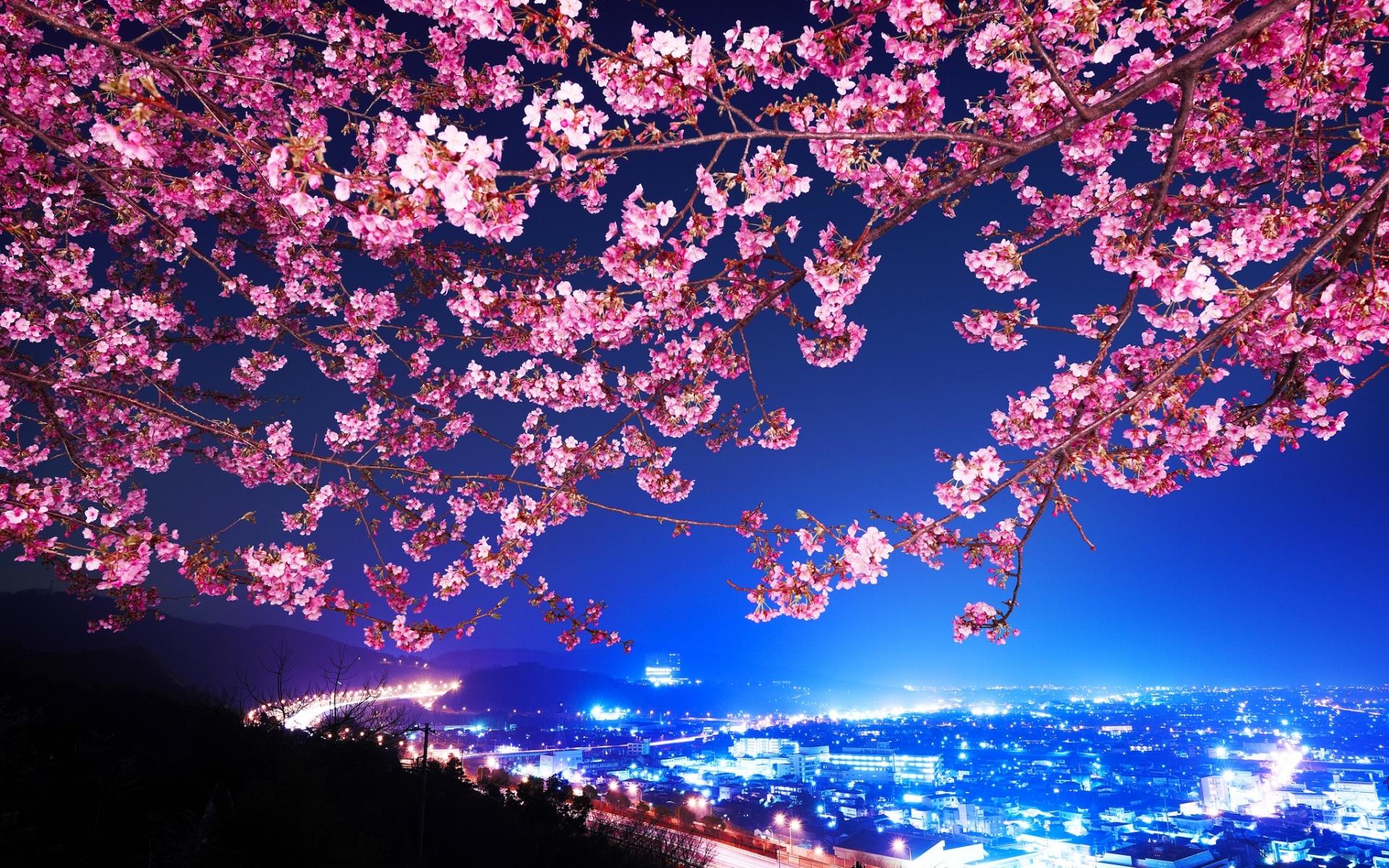 26025 скачать обои Пейзаж, Города, Цветы, Деревья, Ночь - заставки и картинки бесплатно