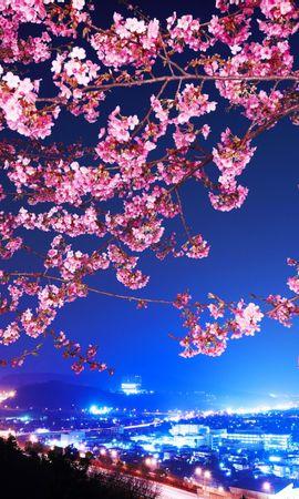26025 télécharger le fond d'écran Paysage, Villes, Fleurs, Arbres, Nuit - économiseurs d'écran et images gratuitement