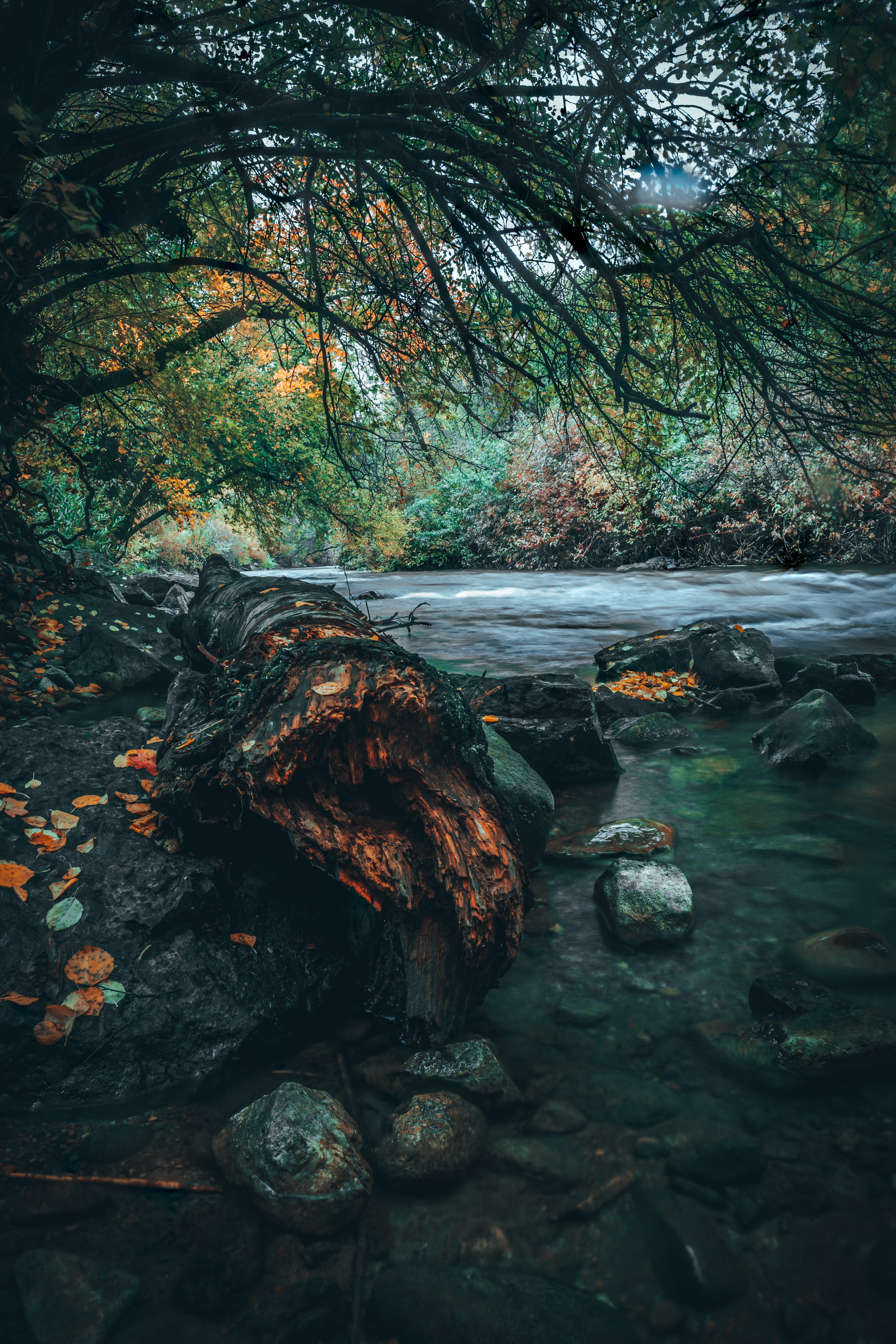 64224 download wallpaper Water, Landscape, Nature, Rivers, Trees, Stones, Shore, Bank screensavers and pictures for free