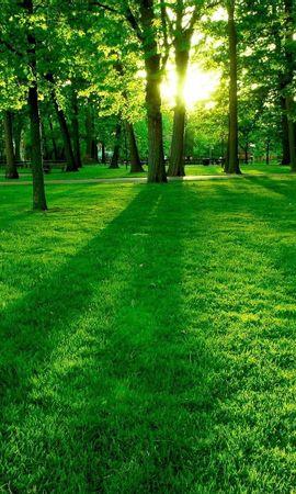 3247 скачать обои Пейзаж, Деревья, Трава, Солнце - заставки и картинки бесплатно
