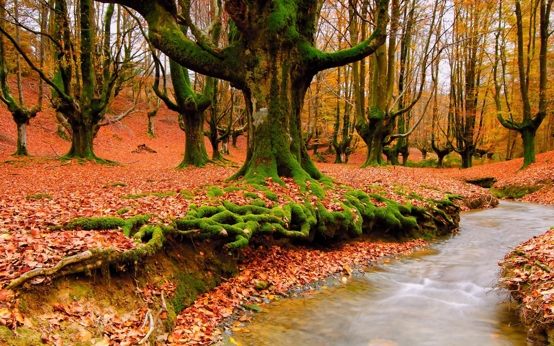 Скачать картинку Река, Деревья, Осень, Пейзаж в телефон бесплатно.