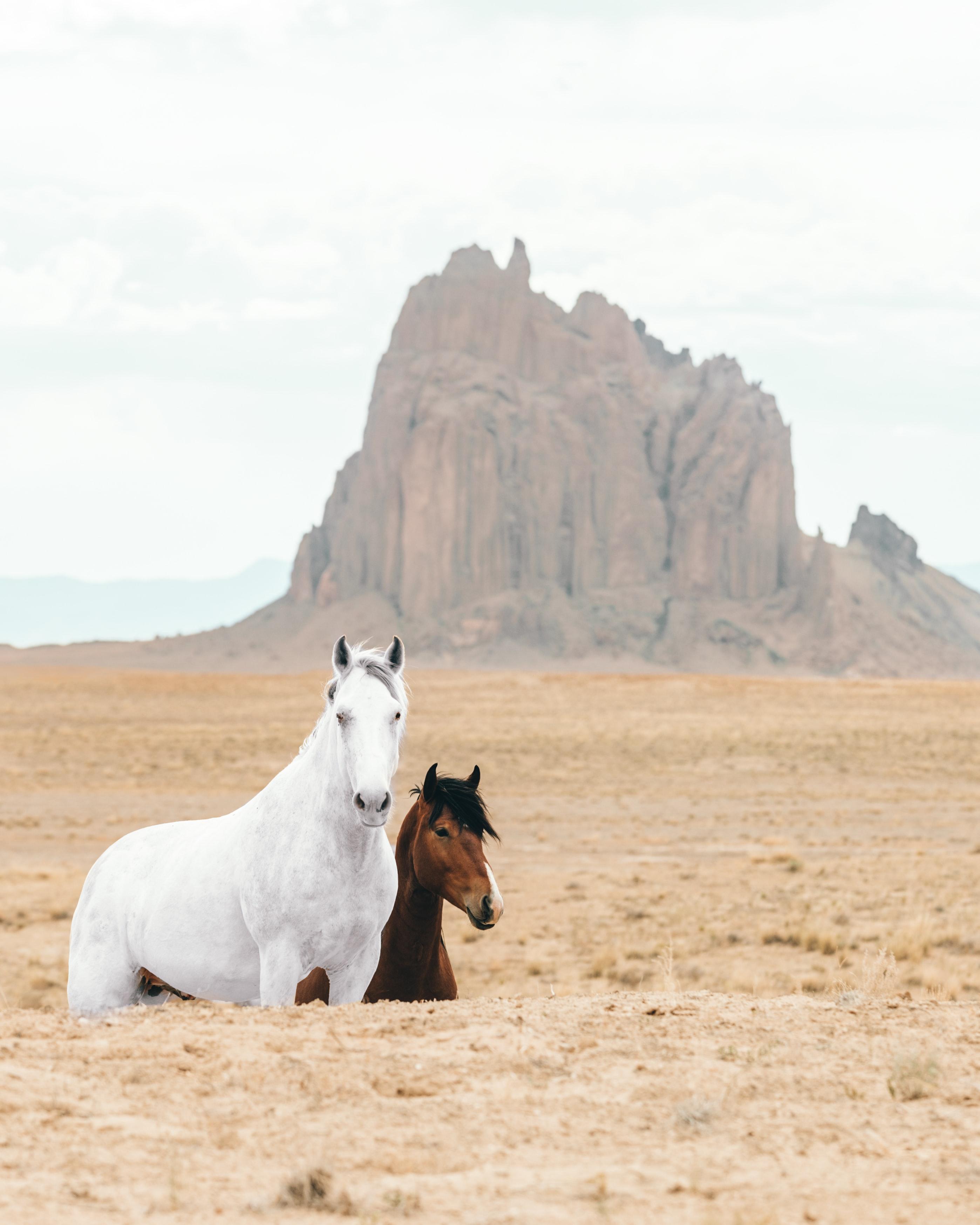 123290 скачать обои Животные, Лошадь, Лошади, Скалы, Песок - заставки и картинки бесплатно
