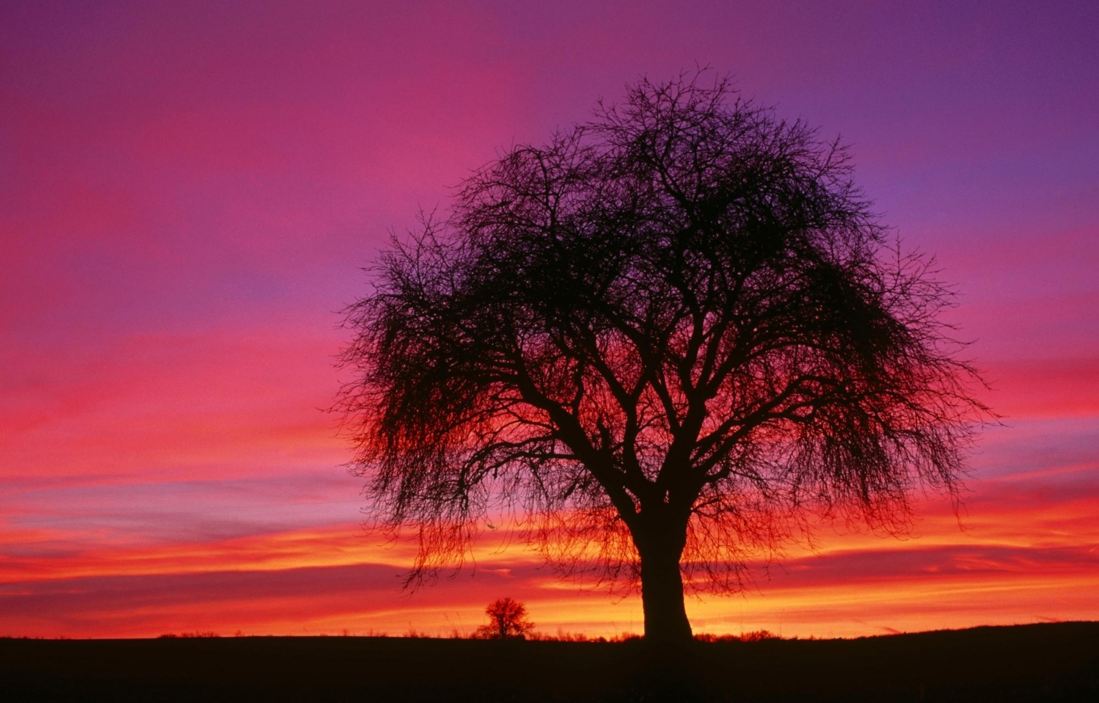 4428 download wallpaper Landscape, Trees, Sunset, Sky screensavers and pictures for free