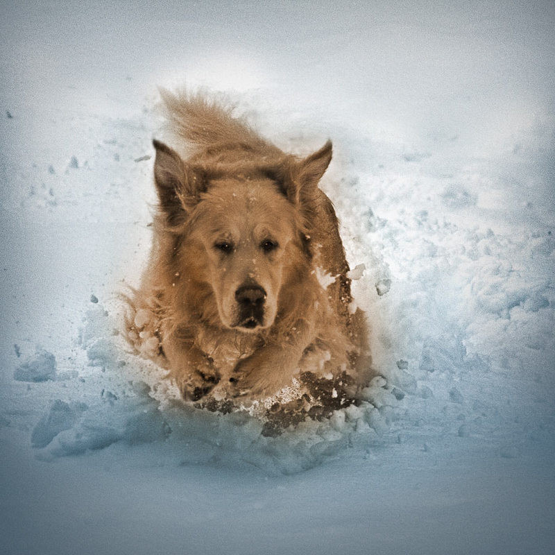 6130 download wallpaper Animals, Dogs screensavers and pictures for free