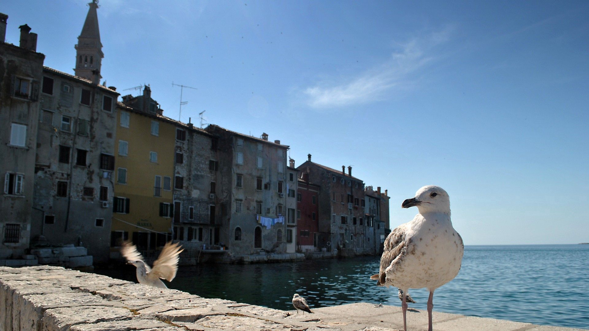 137310 download wallpaper Animals, Gull, Seagull, Bird, Building, Sea screensavers and pictures for free