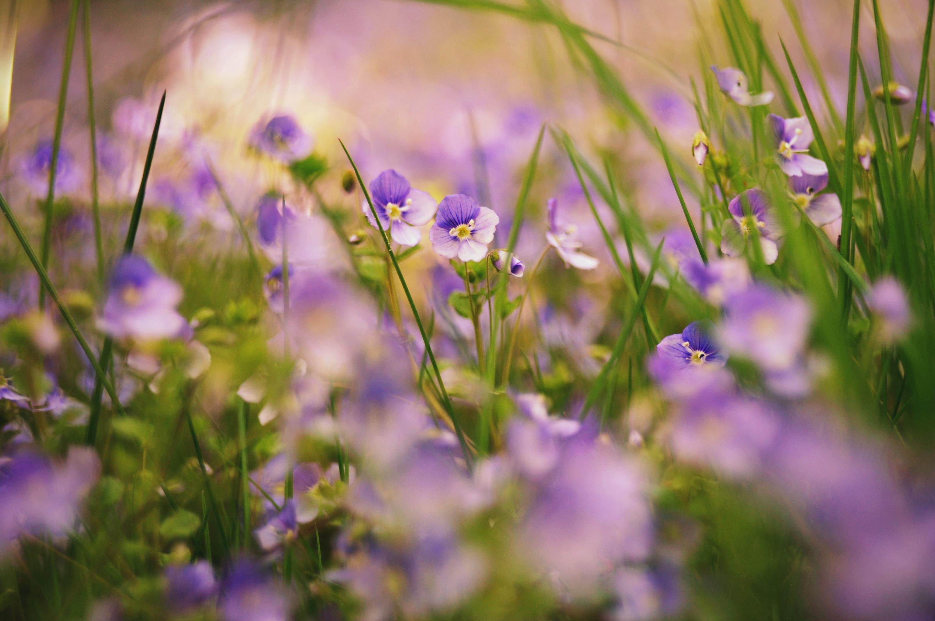 104296 скачать обои Макро, Трава, Природа, Растения, Цветы - заставки и картинки бесплатно