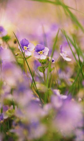 104296 descargar fondo de pantalla Macro, Hierba, Naturaleza, Plantas, Flores: protectores de pantalla e imágenes gratis