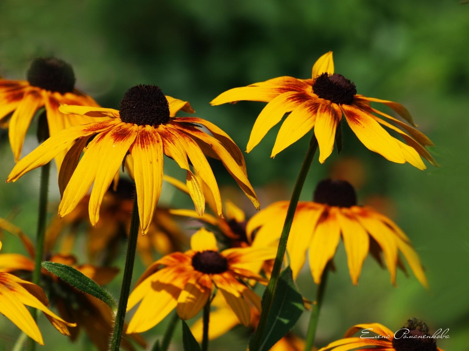4780 скачать обои Растения, Цветы - заставки и картинки бесплатно