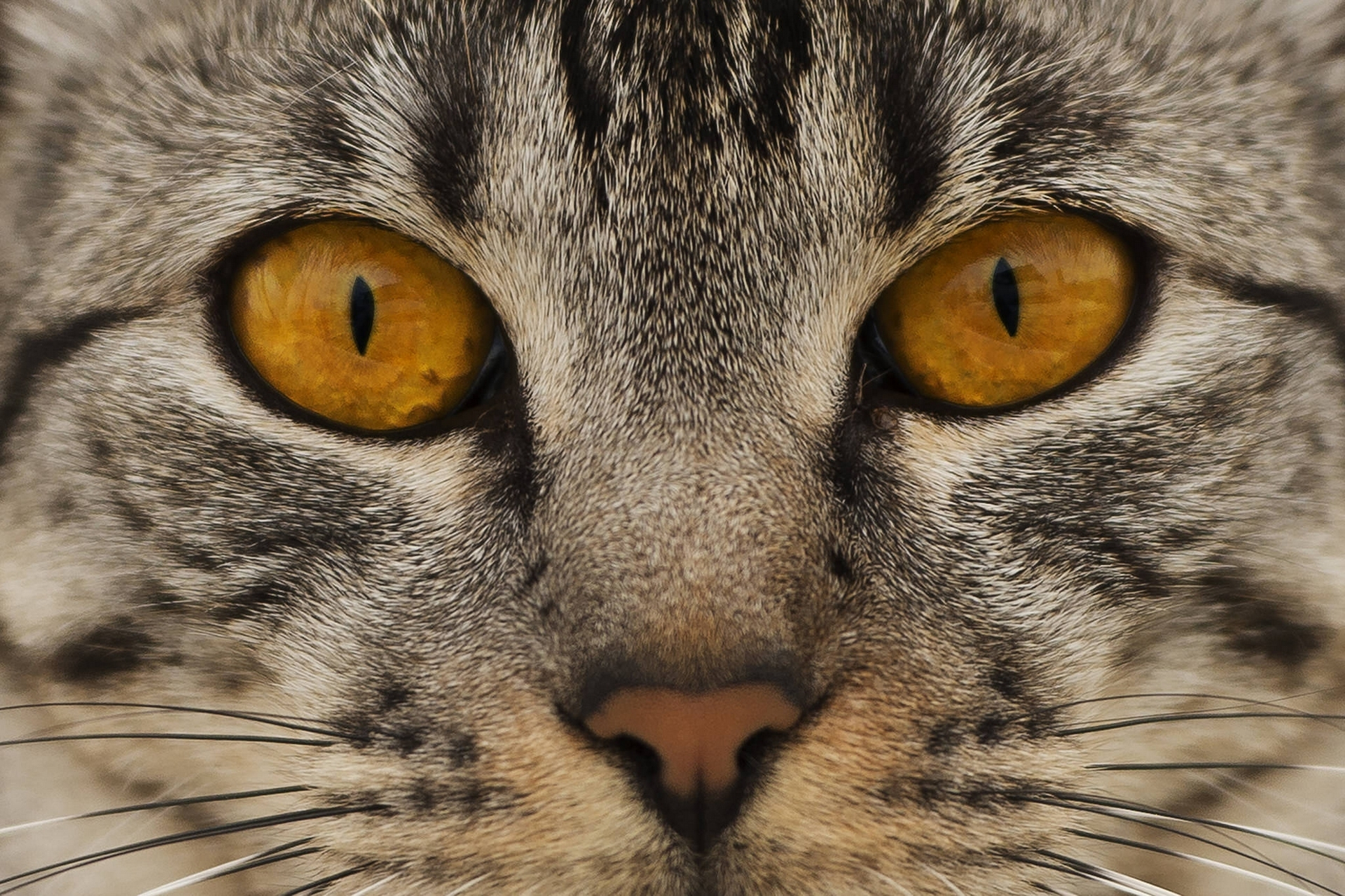Download mobile wallpaper Eyes, Nose, Cat, Animals, Muzzle for free.