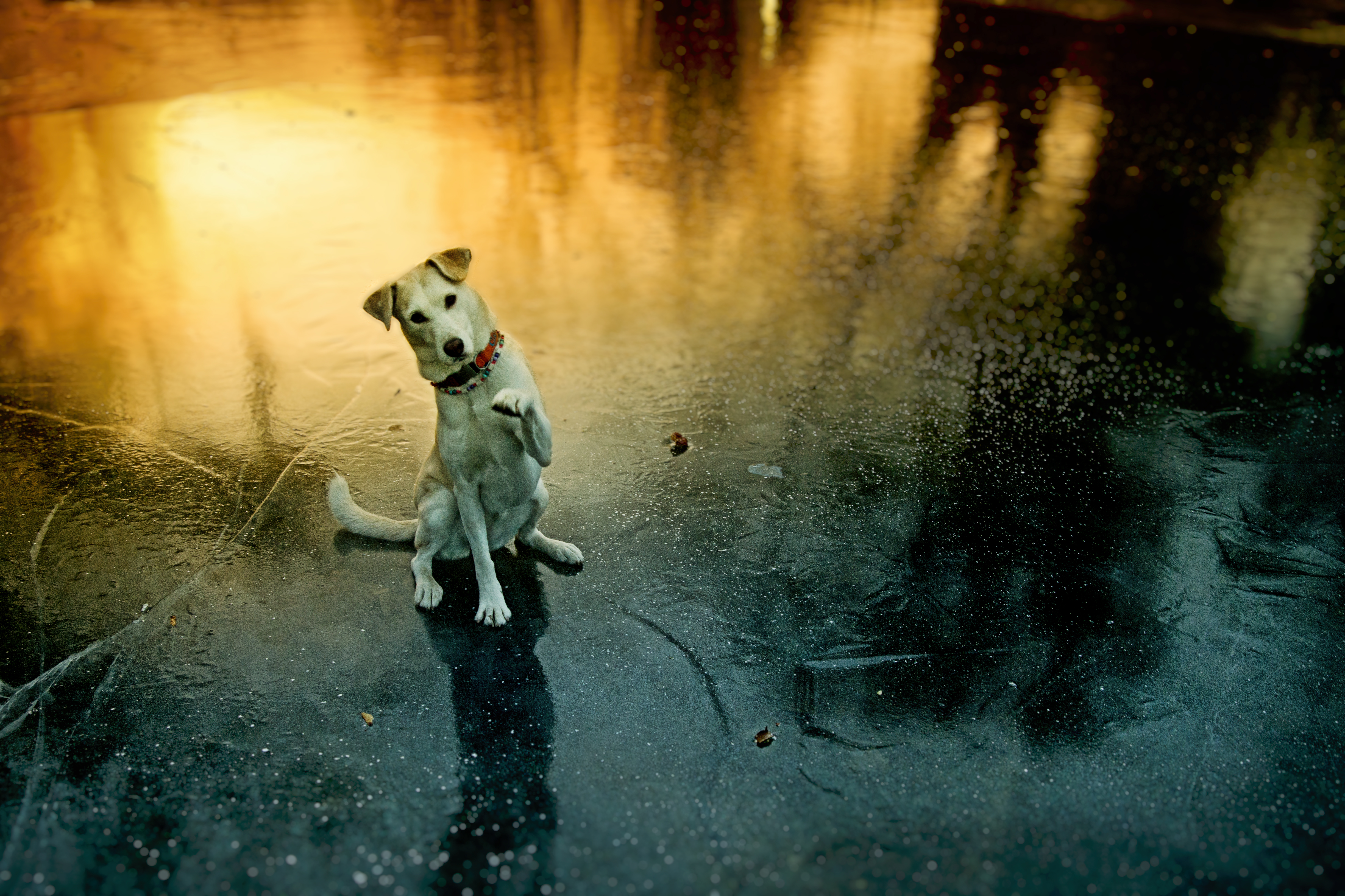 123846 Screensavers and Wallpapers Pet for phone. Download Animals, Dog, Paw, Pet, Funny, Playful pictures for free