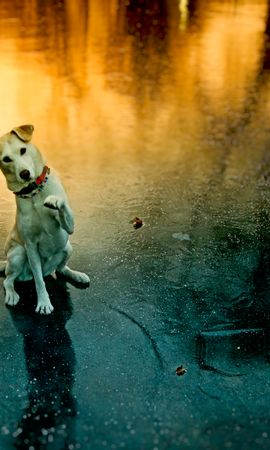 123846 download wallpaper Animals, Dog, Paw, Pet, Funny, Playful screensavers and pictures for free