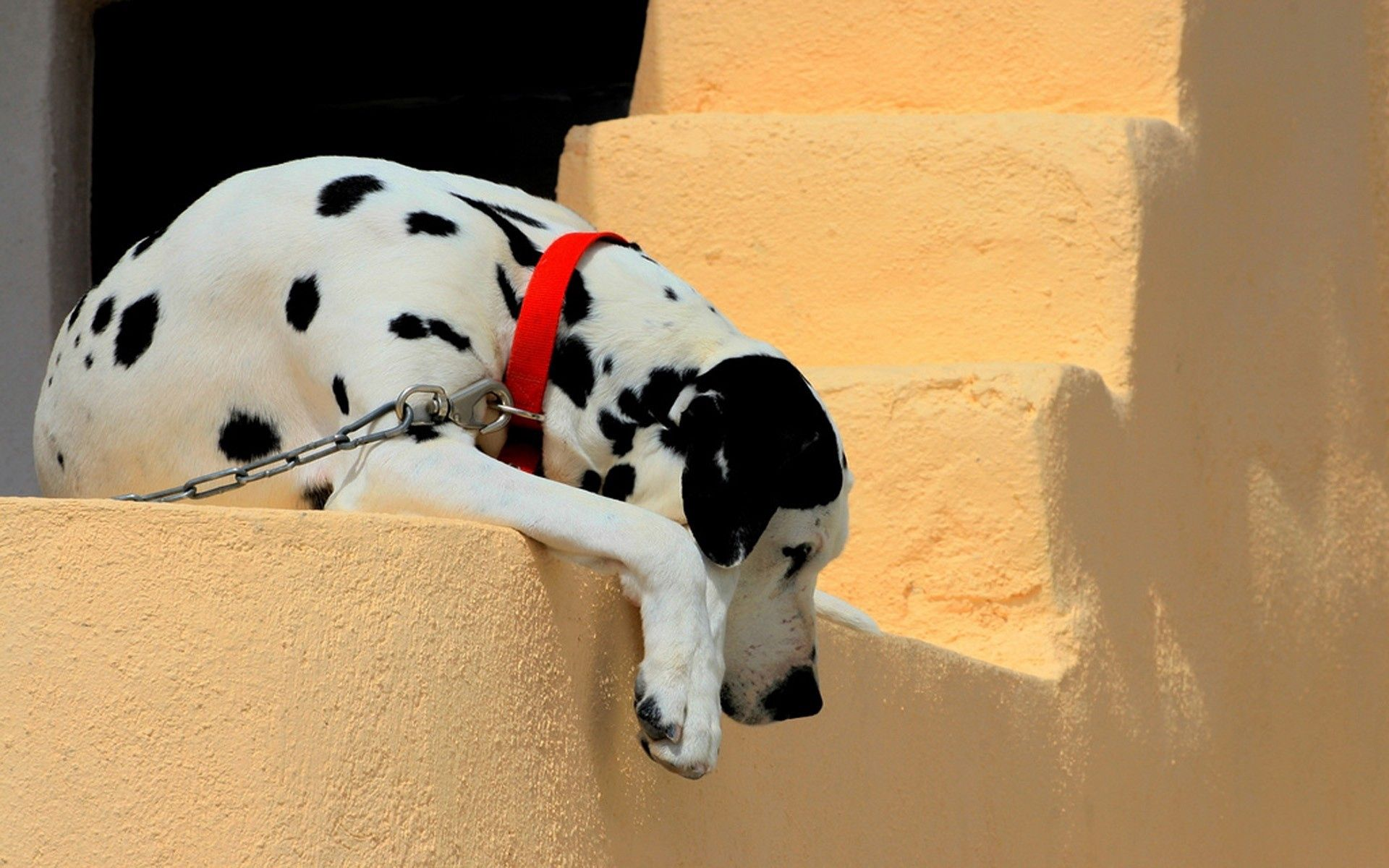 152497 download wallpaper Animals, Dalmatian, Dog, Collar, To Lie Down, Lie, Shadow, Stairs, Ladder screensavers and pictures for free