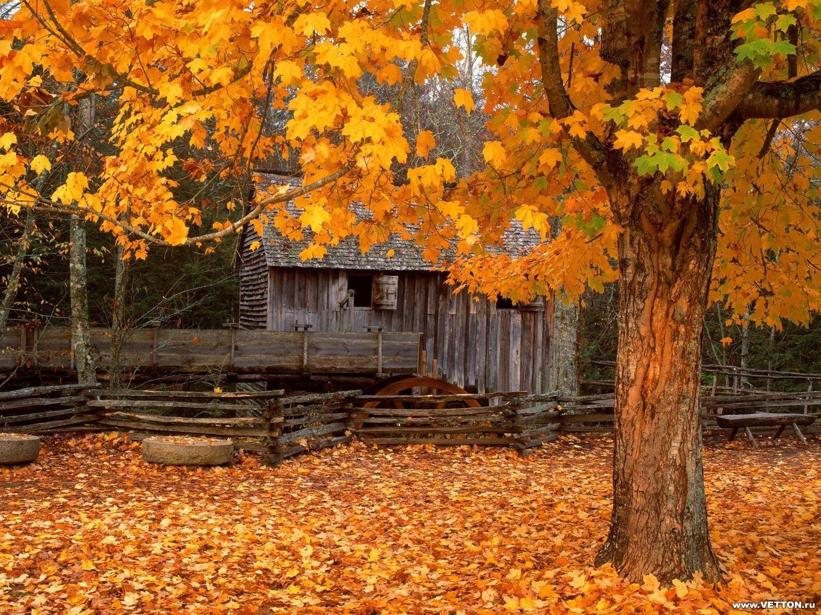 2775 скачать обои Пейзаж, Дома, Осень, Листья - заставки и картинки бесплатно
