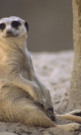 6596 download wallpaper Animals screensavers and pictures for free