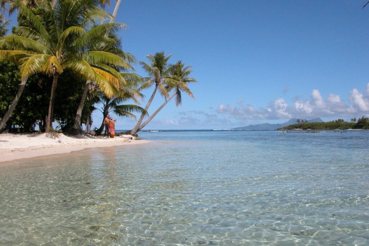 Скачать картинку Пейзаж, Море, Пляж, Пальмы в телефон бесплатно.