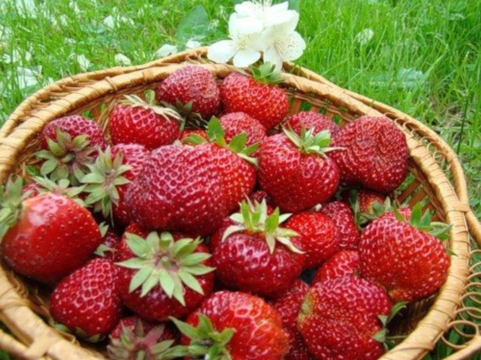 4275 download wallpaper Plants, Fruits, Food, Strawberry, Berries screensavers and pictures for free