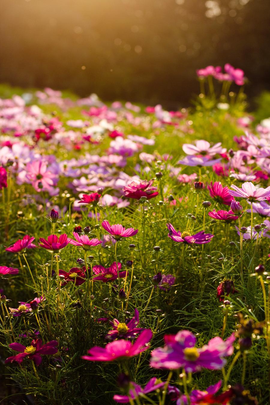 22452 скачать обои Растения, Цветы - заставки и картинки бесплатно