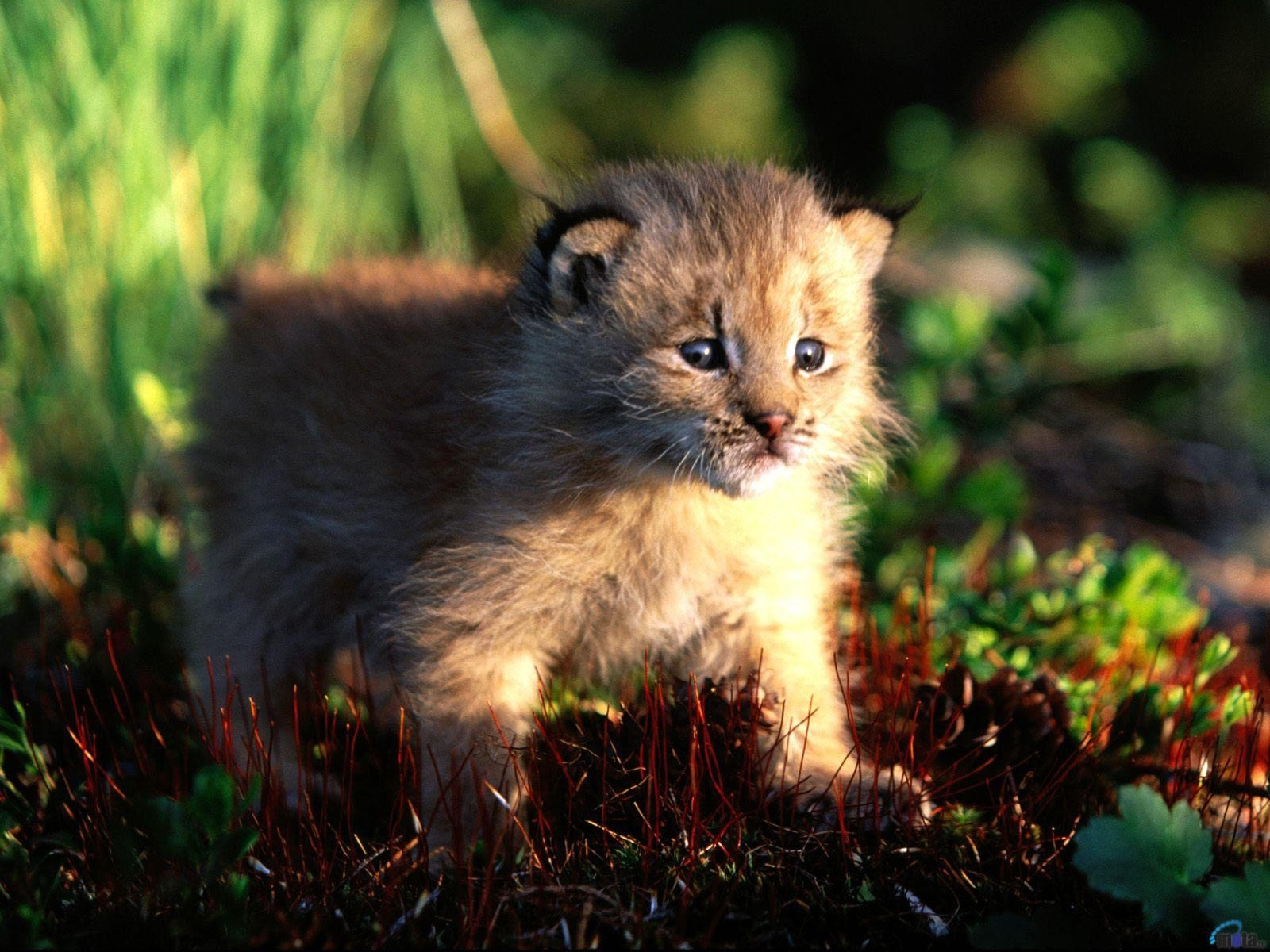 4 download wallpaper Animals, Cats screensavers and pictures for free