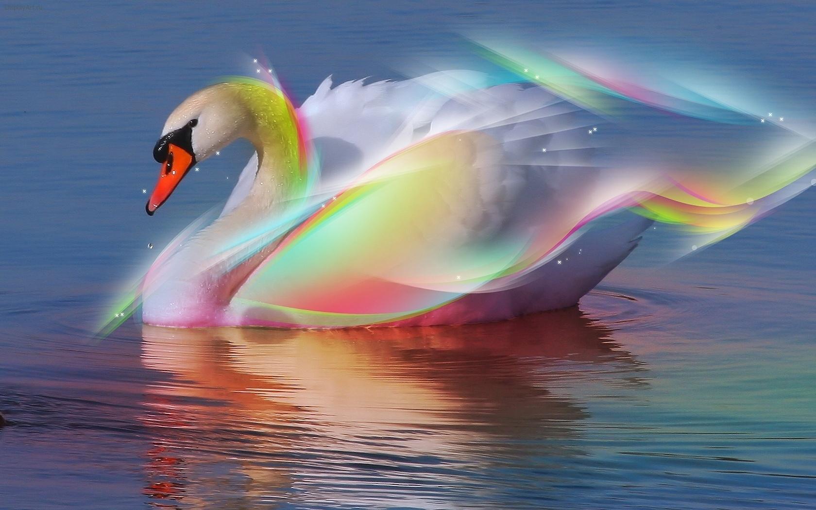 39841 Hintergrundbild herunterladen Swans, Tiere, Vögel - Bildschirmschoner und Bilder kostenlos