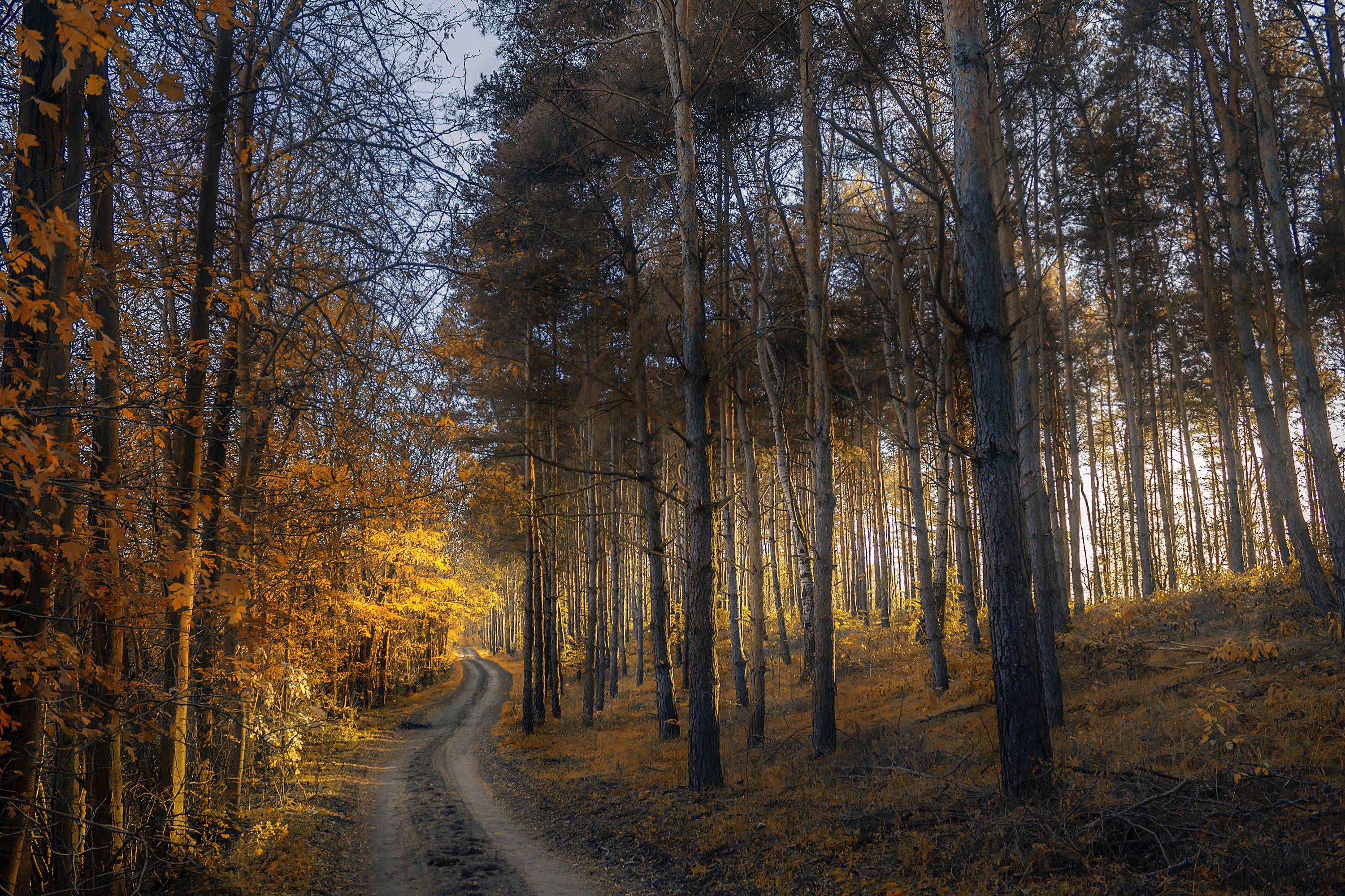 135370 download wallpaper Grass, Nature, Trees, Autumn, Forest, Path screensavers and pictures for free