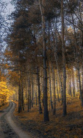 135370 Salvapantallas y fondos de pantalla Hierba en tu teléfono. Descarga imágenes de Naturaleza, Otoño, Bosque, Camino, Hierba, Árboles gratis