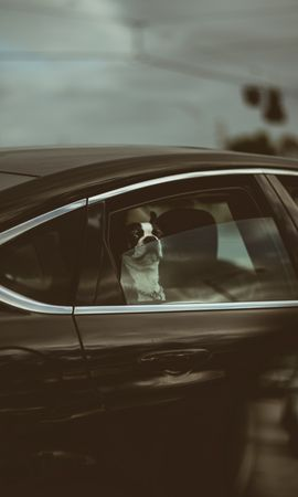 95010 Screensavers and Wallpapers Funny for phone. Download Animals, Bulldog, Dog, Car, Machine, Funny pictures for free
