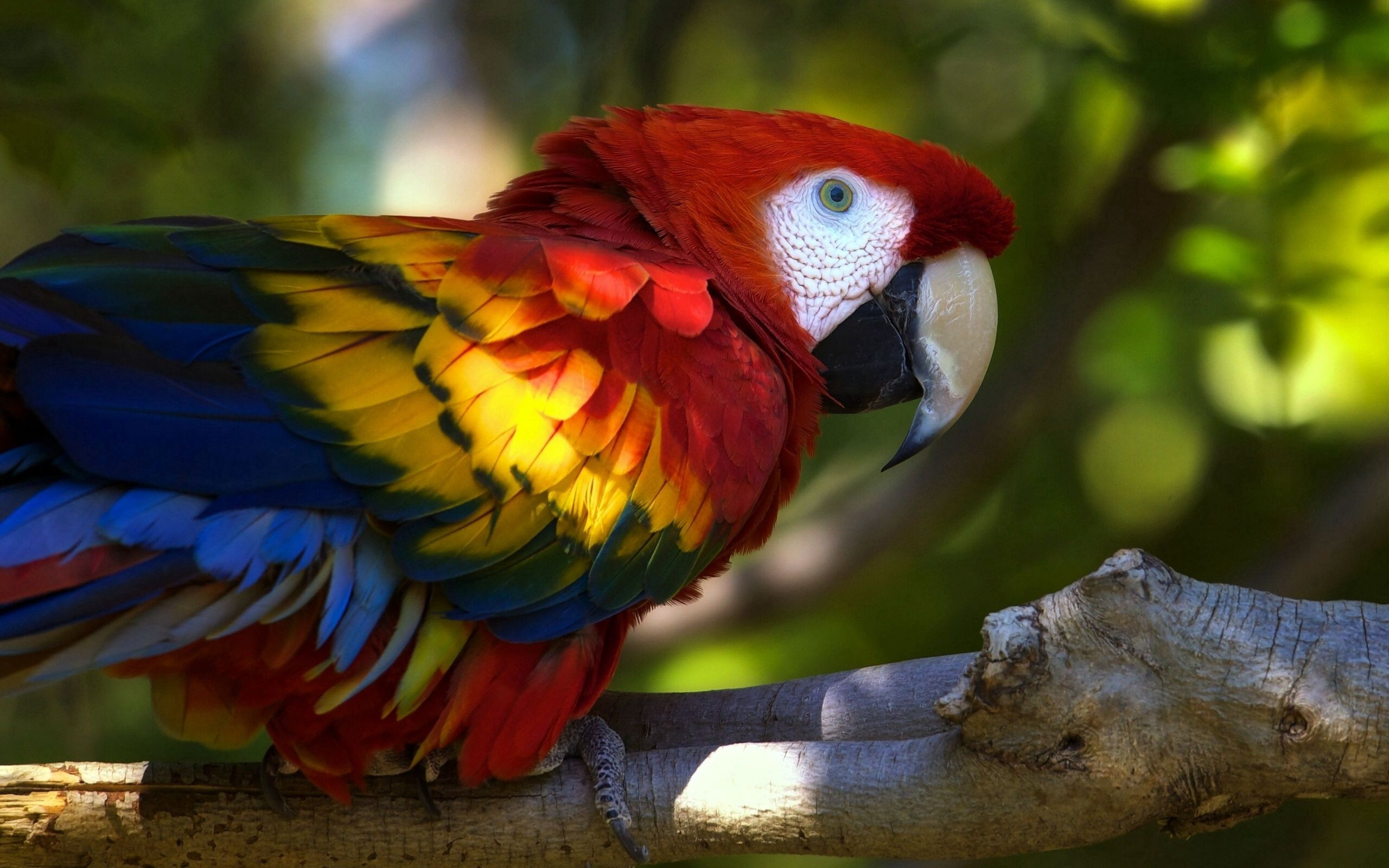 83147 download wallpaper Animals, Parrots, Macaw, Bird, Branch screensavers and pictures for free