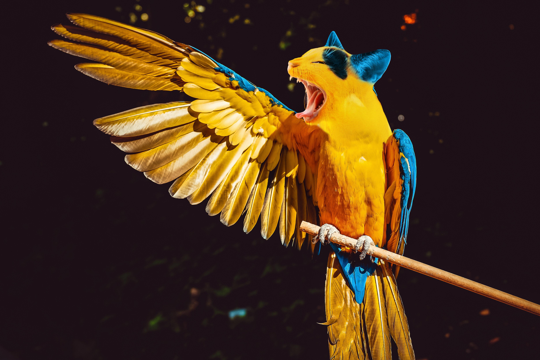 91829 скачать обои Животные, Попугаи, Кот, Фотошоп, Юмор, Прикол - заставки и картинки бесплатно